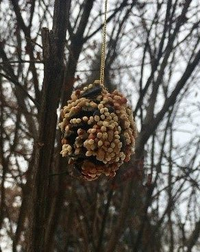 Hung Pinecone feeded